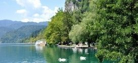 AA+Bled+01